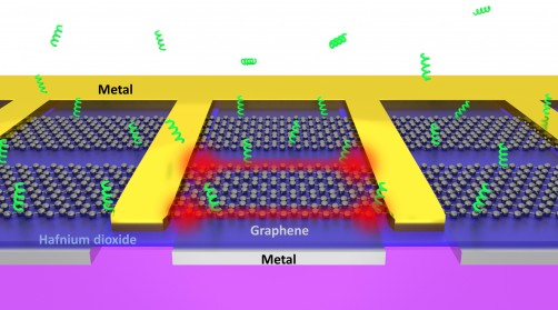 Newswise: Researchers Develop Graphene Nano 'Tweezers' That Can Grab Individual Biomolecules