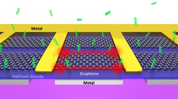 "Atomically sharp edges of electrically driven graphene can act as ""tweezers"" that rapidly trap biomolecules from the surrounding solution."