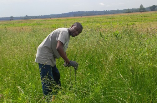 Newswise: Easing the Soil's Temperature