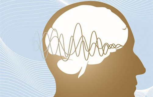 Newswise: Bear or Chipmunk? Engineer Finds How Brain Encodes Sounds
