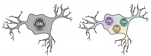 Newswise: Physicists Negate Century-Old Assumption Regarding Neurons and Brain Activity