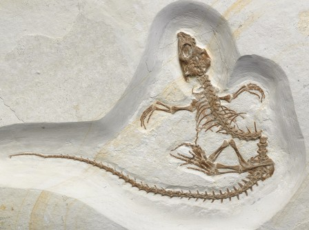 Newswise: Evolutionary Biologists Say Recently Discovered Fossil Shows Transition of a Reptile From Life on Land to Life in the Sea