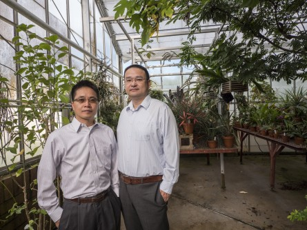 Newswise: Light-Splitting Film for Greenhouses Could Improve Photosynthetic Efficiency, Increase Crop Yields