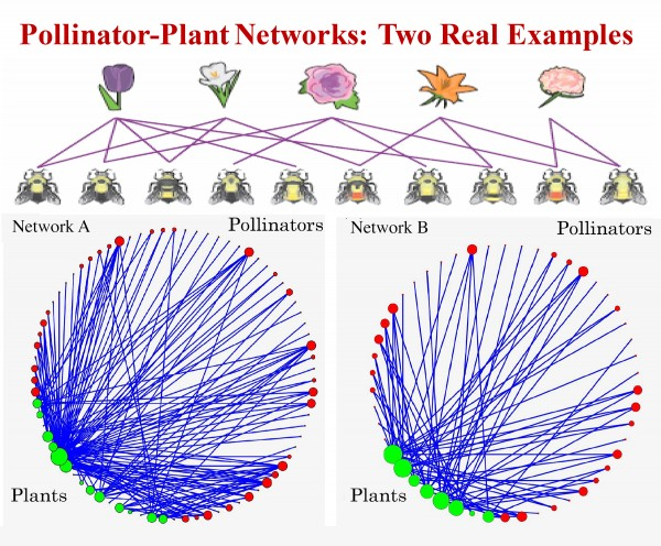 Network A: Data from Hicking, Norfold, UK -- 61 pollinators, 17 plants and 146 mutualistic interactions.  Network B: Data from Hestehaven, Denmark -- 42 pollinators, 8 plants and 79 mutualistic connections.