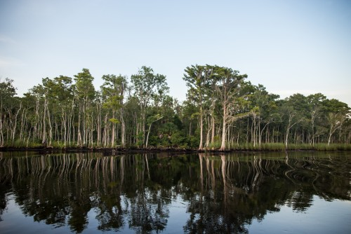 Newswise: UF/IFAS Rethinking Forest Protection; Hosts UN Expert as Lecturer