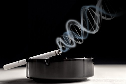 Newswise: Study of Smoking and Genetics Illuminates Complexities of Blood Pressure