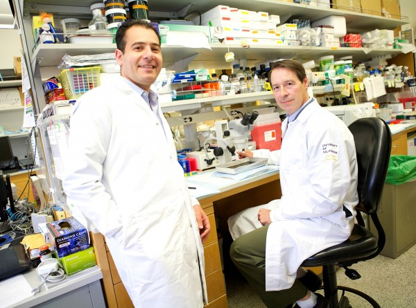 UCLA researchers Tamer Sallam, left, and Peter Tontonoz expect that further exploration will lead to new insights into normal physiology as well as disease.