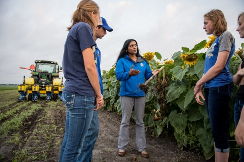 Newswise: Helping Sunflower Producers Fight Stem Canker