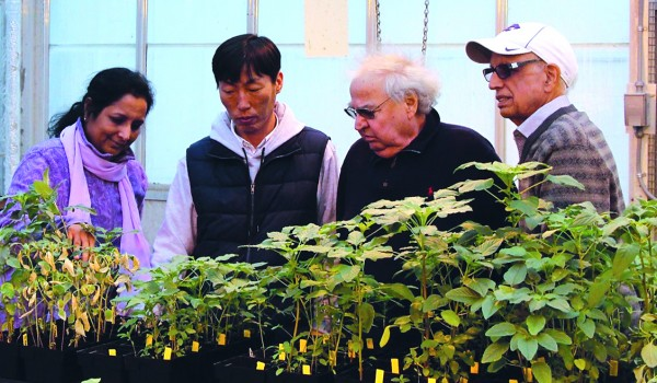 Kansas State University researchers have discovered the mechanism by which weeds develop resistance to glyphosate, an herbicide. Their work could lead to improved weed control strategies and improved production in farm fields and other areas where weeds affect plants and crops. Pictured, left to right, are Mithila Jugulam, Dal-Hoe Koo, Bernd Friebe and Bikram Gill.