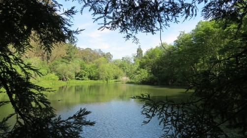 This lake in Berkeley, California was one source of the toluene-producing enzyme (phenylacetate decarboxylase) discovered in the JBEI study.