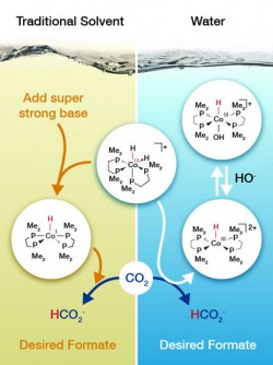 Catalysis researchers determined that the cobalt-based catalyst (center) takes a different path to adding hydrogen (H) to carbon dioxide (CO<sub>2</sub>) depending on whether it is in a traditional solvent or water.