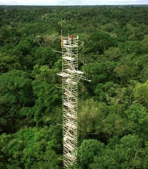To collect data on volatile organic compounds and secondary organic aerosols in the atmosphere, the GoAmazon team collected data from the top of the Eddy Flux Tower.
