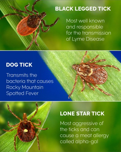 Newswise: Top Tick Tips: What to Know and How to Protect Yourself