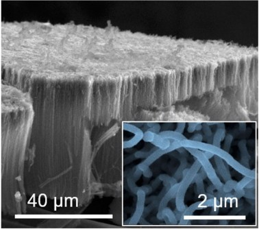A scanning electron microscopy image of vertically aligned carbon nanotube electrodes coated with titanium disulfide deposited one atomic layer at a time. The magnified inset shows individual titanium disulfide coated carbon nanotube electrodes (μm=micrometer).