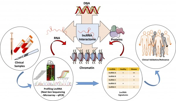 Identifying the mechanisms of action and clinical relevance of lncRNAs.