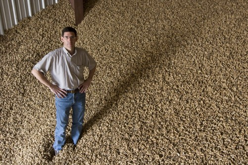 Newswise: UF, Georgia Tech Scientists to Begin Work on More Drought-Tolerant Peanut