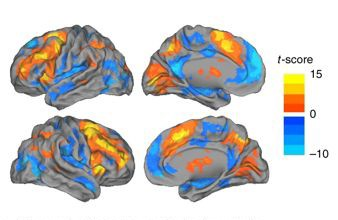 Newswise: Researchers Uncover Hidden Brain States That Regulate Performance and Decision Making