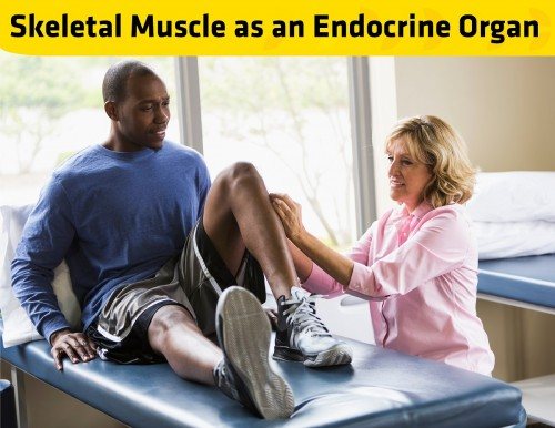Newswise: The Badge Advantage: Skeletal Muscle as an Endocrine Organ