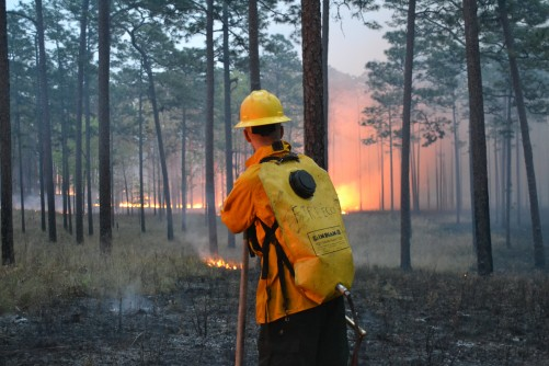 Newswise: Most Fires in Florida go Undetected