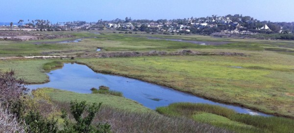 San Elijo Lagoon in San Diego County, California, where Picohlorum SE3 was isolated by Brian Palenik.