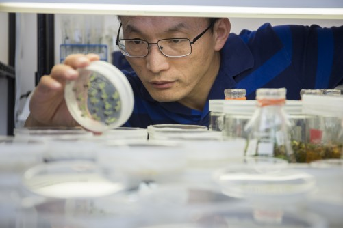 Newswise: UF/IFAS Earns Record $166 Million for Research to Help Solve Critical Issues