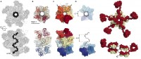 Newswise: Scientists Capture Images of Antibodies Working Together Against Malaria