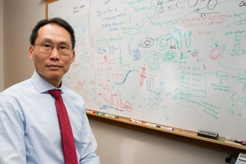 Newswise: Wilfred Chen and DNA Computers