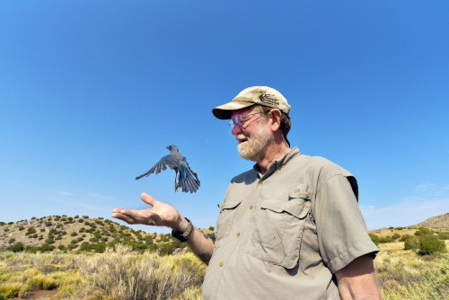 Sandia National Laboratories wildlife biologist Steve Cox releases a bird after gathering data for an international avian program. He said the best part of his job is the field work.