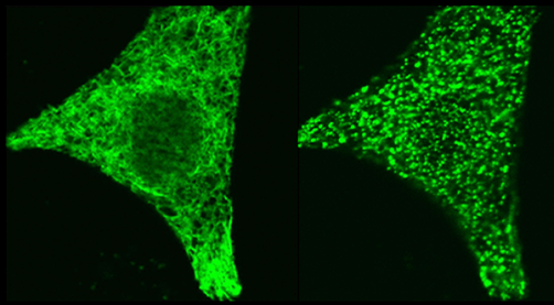 Newswise: LJI investigators discover how protein pair controls cellular calcium signals