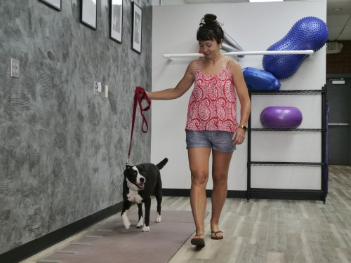 Newswise: New Gene-Therapy Shot Eases Chronic Pain in Dogs; Human Trials Now Underway