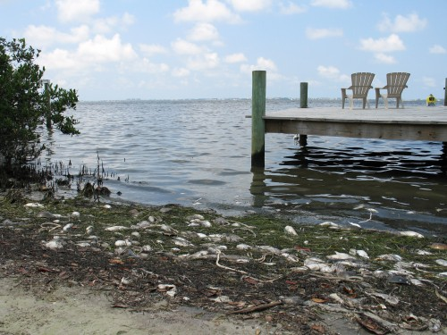 Newswise: FAU Research Experts Available to Discuss Red Tide,  