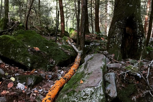 Rocks, moss, fallen tree limbs and leaves blanket the forest floor along West Virginia's Hemlock Trail.