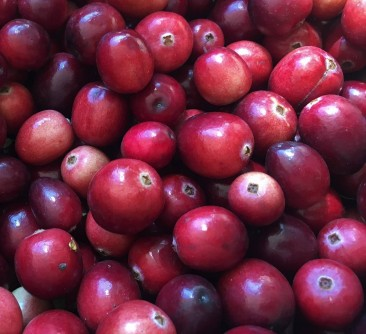 Newswise: Cranberries -- They're Not Just for Thanksgiving Anymore
