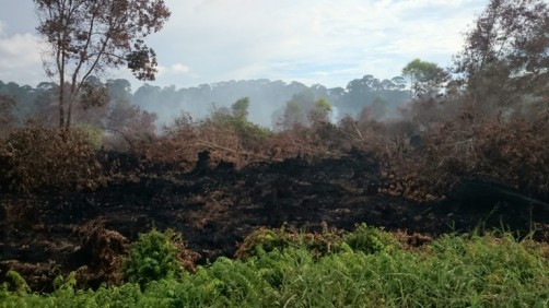 Newswise: UCI and Singapore Researchers Find Source of 2015 Southeast Asia Smoke Cloud