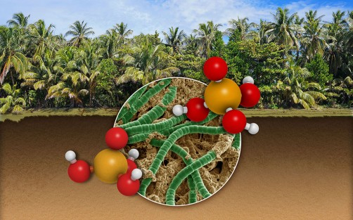 Scientists are studying how microbes in soil use nutrients like phosphorus at the molecular level, helping better model efficient land use and terrestrial processes.